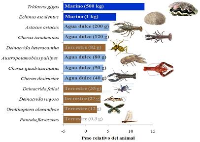 IVulnerabilidad a la extinción de animales invertebrados