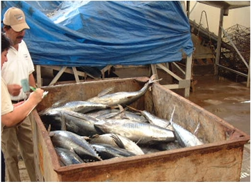 IAceite de atún para el tratamiento de hiperlipidemias