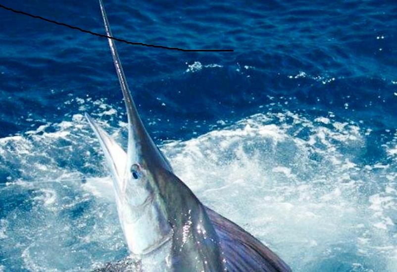 IValoración económica de la pesca deportiva en Baja California Sur