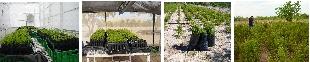 ITecnología para el cultivo de Damiana