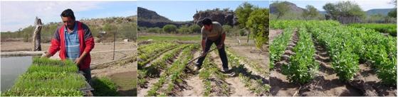 IAgricultura orgánica en comunidades rurales marginadas